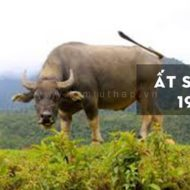 Vòng Đá Phong Thuỷ cho người sinh năm 1985 (Nam, nữ) theo Cung Phi