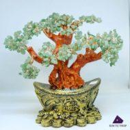 Cây Tài Lộc Phong Thủy Đá Thạch Anh là cây gì?