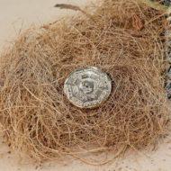 Đồng Tiền Vàng Phong Thủy Việt Nam – Món quà Xuân ý nghĩa, chân tình